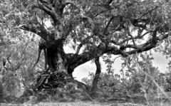 Itinerario rurale Le vie dell'olio