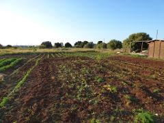 Le coltivazioni