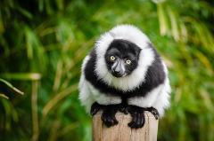 Madagascar - Tour del Nord e Nosy Be