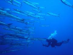 Pacchetto 10 immersioni  Immersioni Diurne