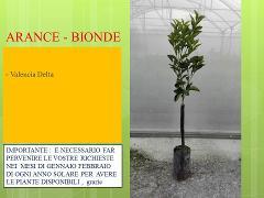 ARANCE BIONDE