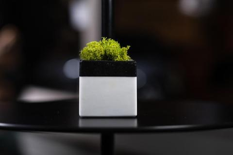 "CUBO DI MARMO E MOSS- CISAM DESIGN ""HOPE IMMORTAL"""
