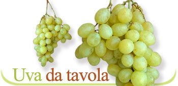Uva da tavola uva da tavola prodotti mazzarrone catania - Uva da tavola bianca ...