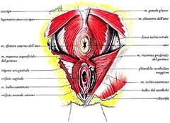 Incontinenza Urinaria - Riabilitazione