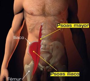 Iliaco muscolo