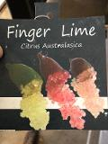 PIANTA FINGER LIME DIVERSE VARIETA' IN OFFERTA € 25.00