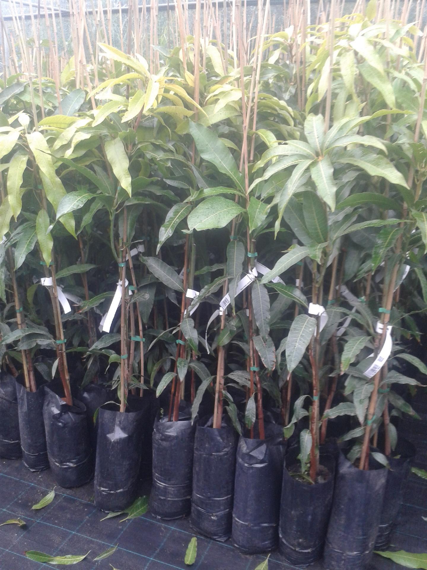 piante esotiche vendita online