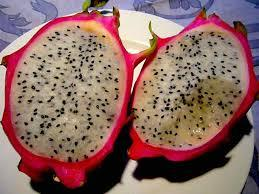 PITAYA IN VASO PITAYA PIANTA TROPICALE