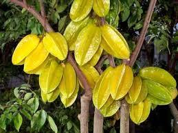 CARAMBOLA IN VASO TROPICALE