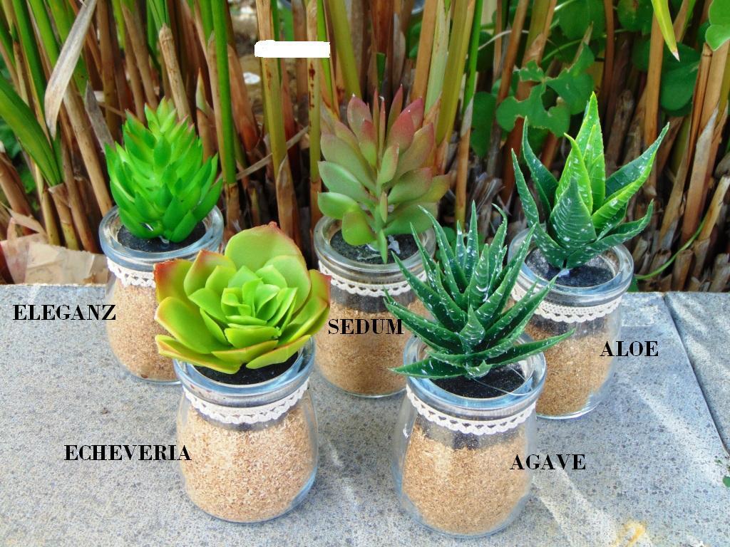 Piante Grasse Piccole Prezzi piante grasse artificiali in 5 modelli con vasetto in vetro