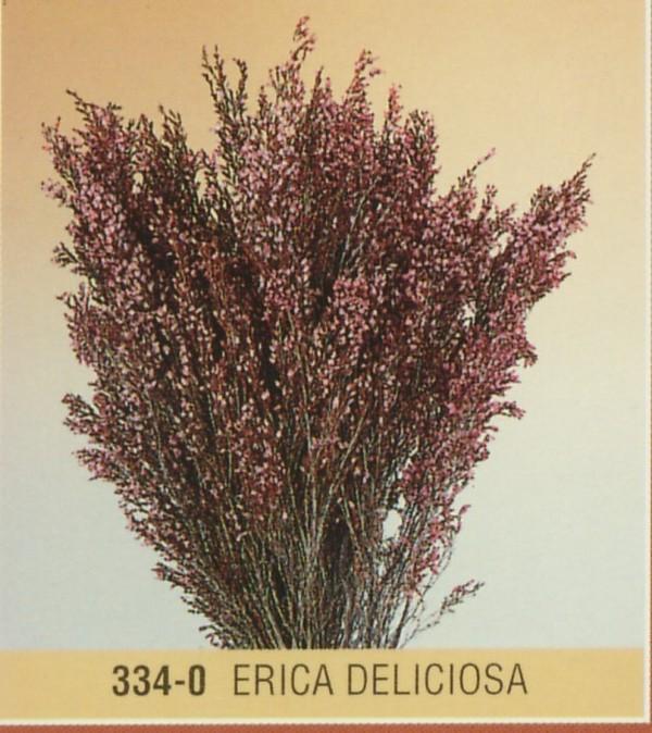 Erika deliciosa stabilizzata san michele di ganzaria for Libri per fioristi
