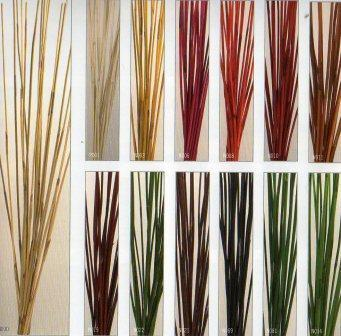 Equisetum stabilizzato Red Bundle gr.200