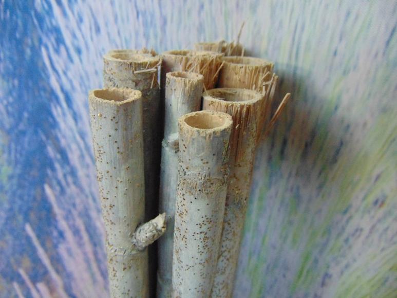 Canne bamboo bianche
