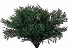 Erica Moss stabilizzata - Licopodium   Gr 500