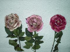 Rosa British   Arredo