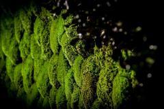 Muschio Ball Moss/Polemoss Preservato Leucobrium Glaucum - Sconti per Fioristi e Aziende