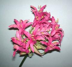 Nerina Beauty x 1 H 90 per fioristi e wedding