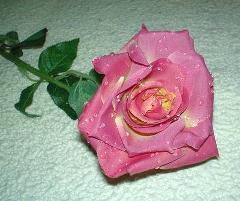 Rosa aperta con rugiada  Artificiale in poliestere per fioristi e wedding