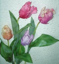Tulipano Pappagallo Singolo