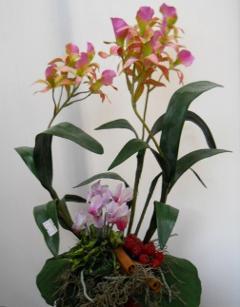 Orchidea Brasso H 50
