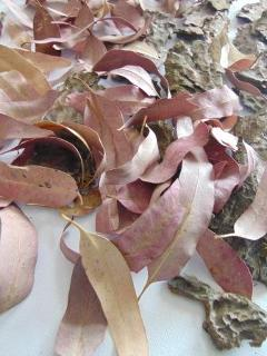 Foglie di Eucaliptus rosa busta  gr. 200
