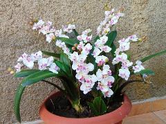Orchidea artificiale x 2 H 56 - Sconti per Fioristi e Aziende