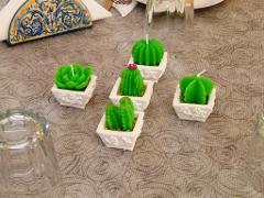 Candele piantine grasse  Conf. x 12 con vaso per fioristi e wedding