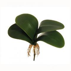 Foglie di orchidea x 4 in poliestere da cm. 20 con radici