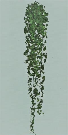 Edera Inglese H 180  con 1076 foglie per fioristi, wedding e Arredatori