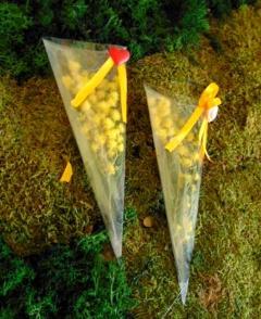 Cono di Mimosa fresca in cono PVC cm. 20 trasparente