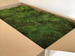 Muschio Mediterraneo preservato Box Kg. 2 ca. per fioristi, wedding e Arredatori