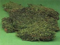 Muschio Mediterraneo stabilizzato Box Kg. 2 ca. per fioristi, wedding e Arredatori