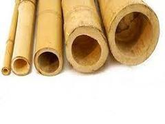 Canna di Bamboo dm 7 / 8 H 200 - 250 - 300 - Sconti per Fioristi e Aziende