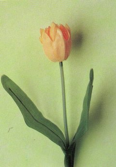 Tulipano   olandese H 39