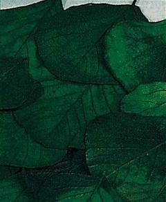 Foglie Kobra Stabilizzate  Naturali in conf. x 10