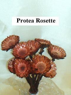 Protea rosetta x 10 naturale