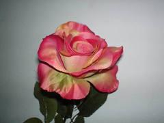 Rosa aperta singola  Arredo