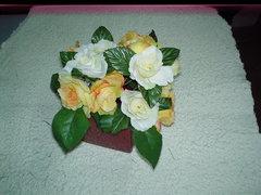 Rose Open bush x 15