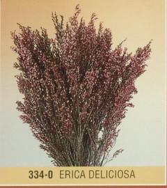 Erika Deliciosa stabilizzata