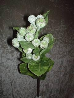 Ramo di Eucalypto con semi verdi