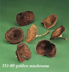 Sponge small - Golden Mushroom