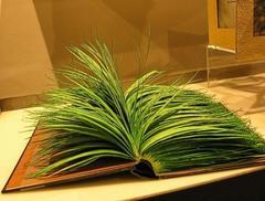 Bear Grass Naturale  stabilizzato  gr. 300