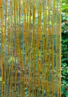 Equisetum naturale stabilizzato Kg. 1 H 80 - Sconti per Fioristi e Aziende