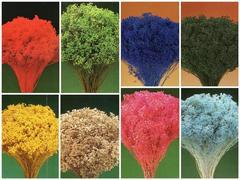 Broom Bloom Naturale colorato Gr. 100