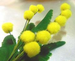Mimosa Pick in ciniglia
