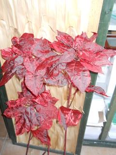 Stella di Natale Large Shiny Ruby  Ruby H 110