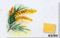 Bigliettini Stampa Mimosa x 50 con buste gialle per fioristi e wedding