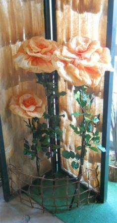 Rosa Crespata   in 3 Misure