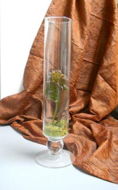 Vaso in vetro   cilindro H 40 dm. 7