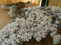 Muschio di Conifera gr. 500 ( Coniferen Moss ) Naturale preservato - Sconti per Fioristi e Aziende